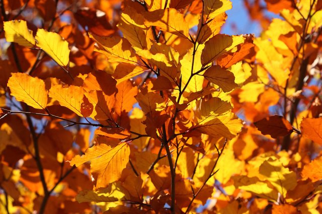 9060-colorful-autumn-leaves-on-trees-pv