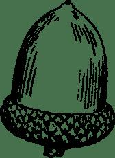 acorn-2026990_960_720