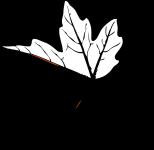 leaf-305412_960_720